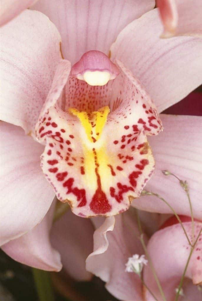 Flowers 1985/2008